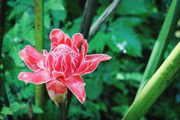 She's just a red flower.?
