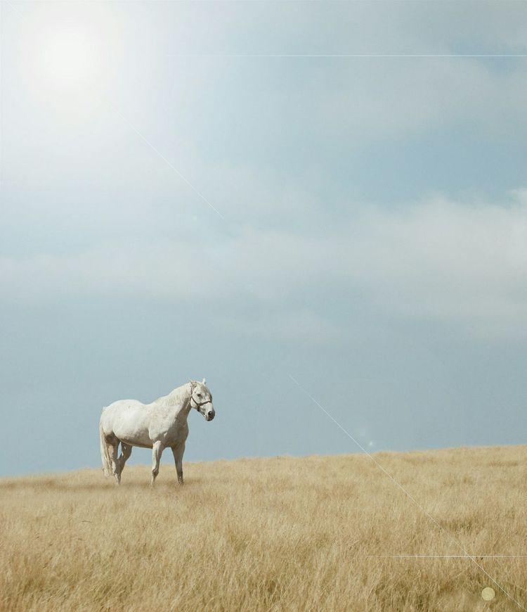 Edit Horse EyeEm Best Shots Animals Eyem Best Edits Nature_collection White Horse Eyem Nature Lover Taking Photos Beautiful