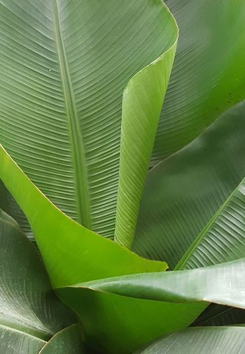 Leaf Green Color Plant Nature Green Texture Leaves Plant Botany Plant Part Pattern Background Garden Photography Green Nature Plant Photography Plants Collection Green Leaves Green Leaves Backfround Green Background Beauty In Nature Backgrounds Green Leaves. Garden Cover Photo Plants Nature