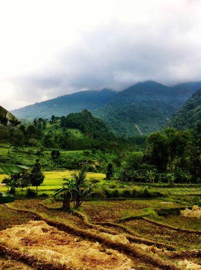 Landscape Nature Farm Rice Paddy Mountain Range Rural Scene