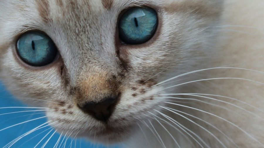 Blue Eyes Abandoned Pet Cats Of EyeEm DPassos 😿😿😿