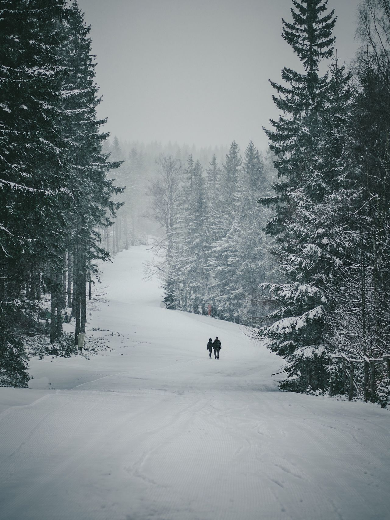 Snow Winter Cold Temperature Tree Nature Beauty In Nature Day Outdoors Real People Scenics One Person Sky Mammal