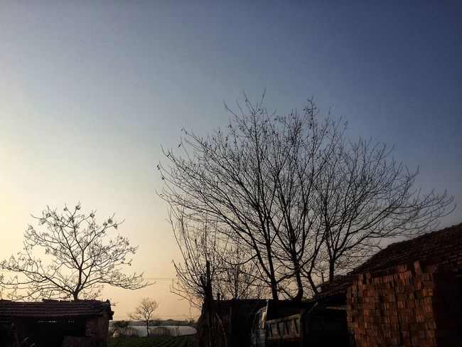 一百个枯树换一个春天🌞 枯树 冬天