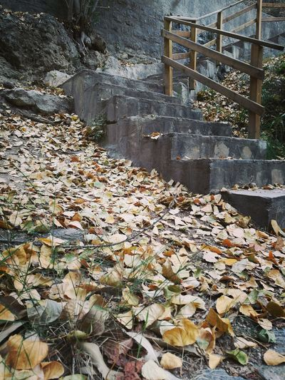 Beauty In Nature Tranquil Scene Leaves Stairs