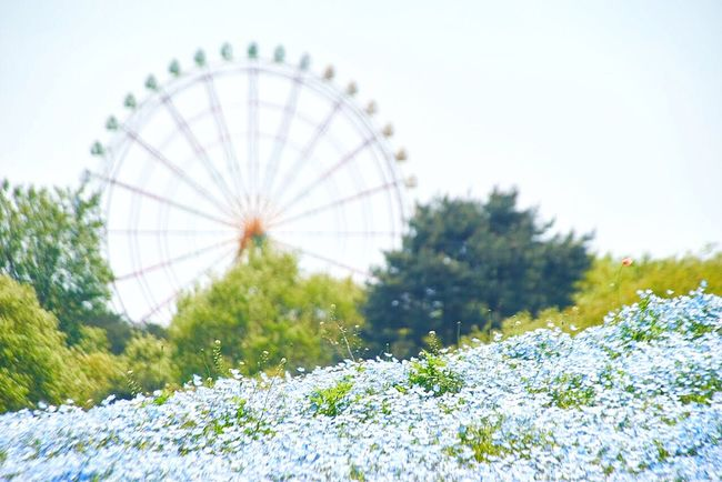 Wheels Park High Exposure Low Angle View Nature_collection Nature EyeEm Nature Lover Nemophila Japan