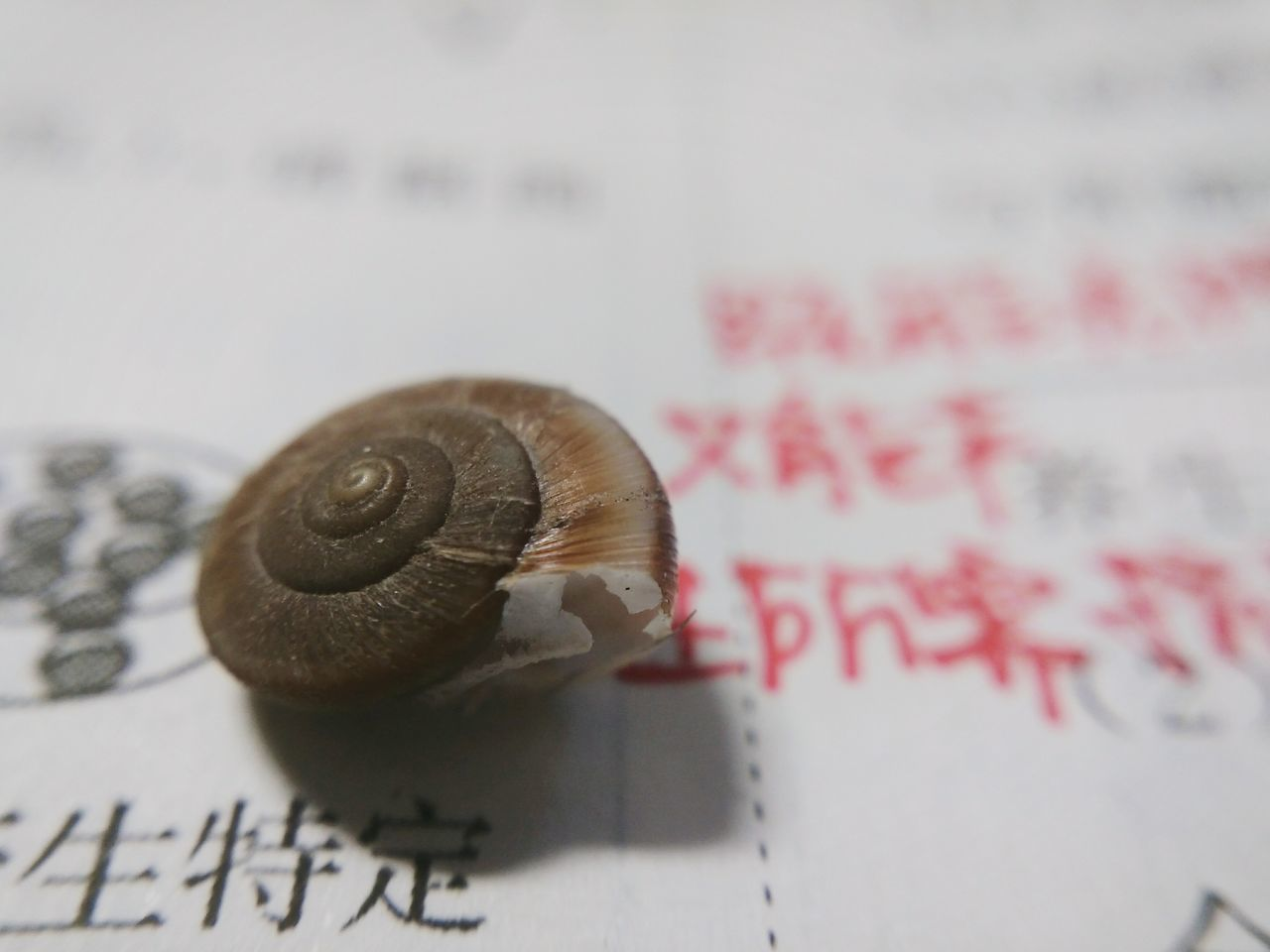 text, snail, communication, no people, one animal, close-up, book, education, paper, indoors, animal themes, day