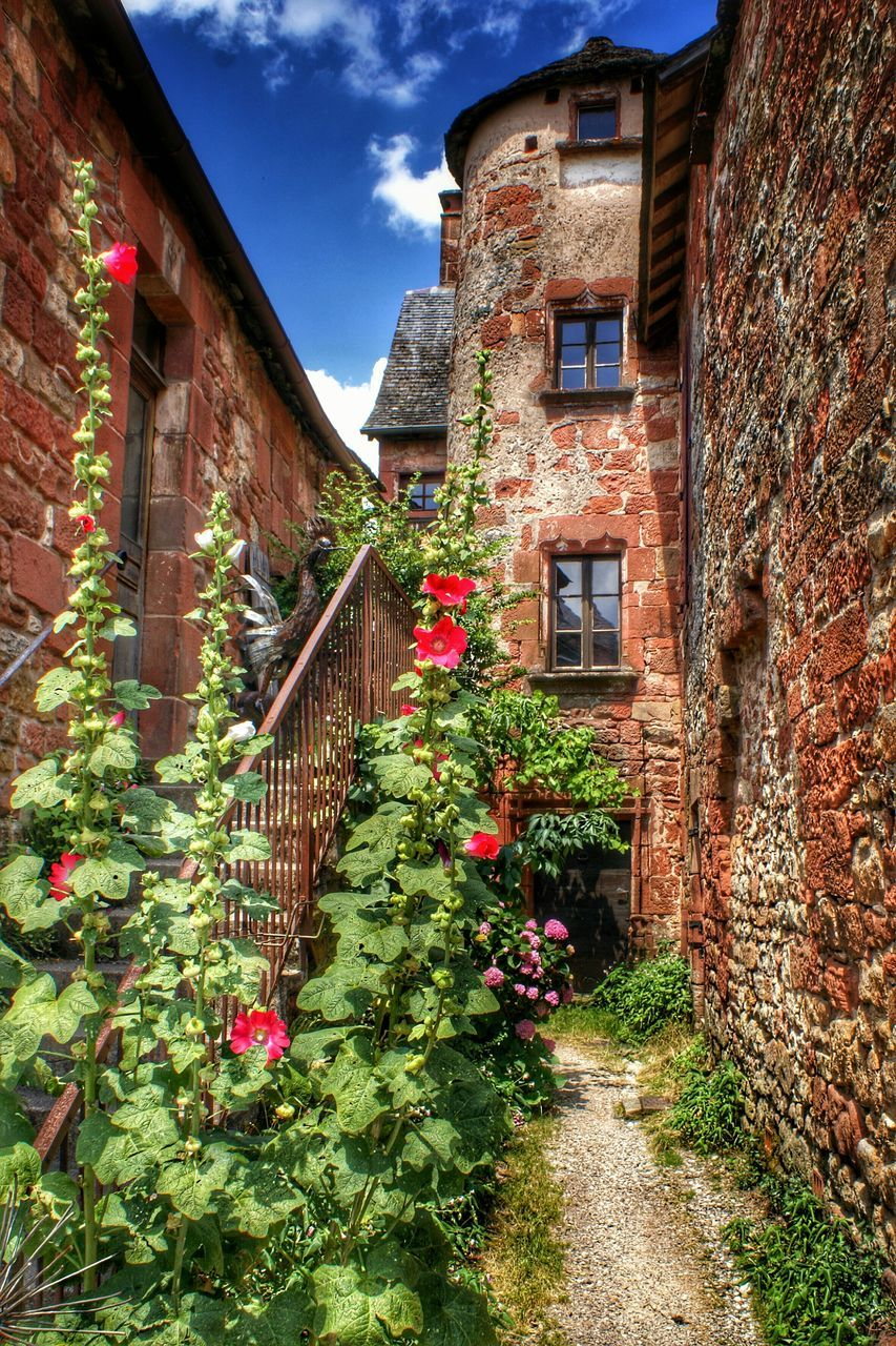Red Flowers In Bloom Next To Old Staircase