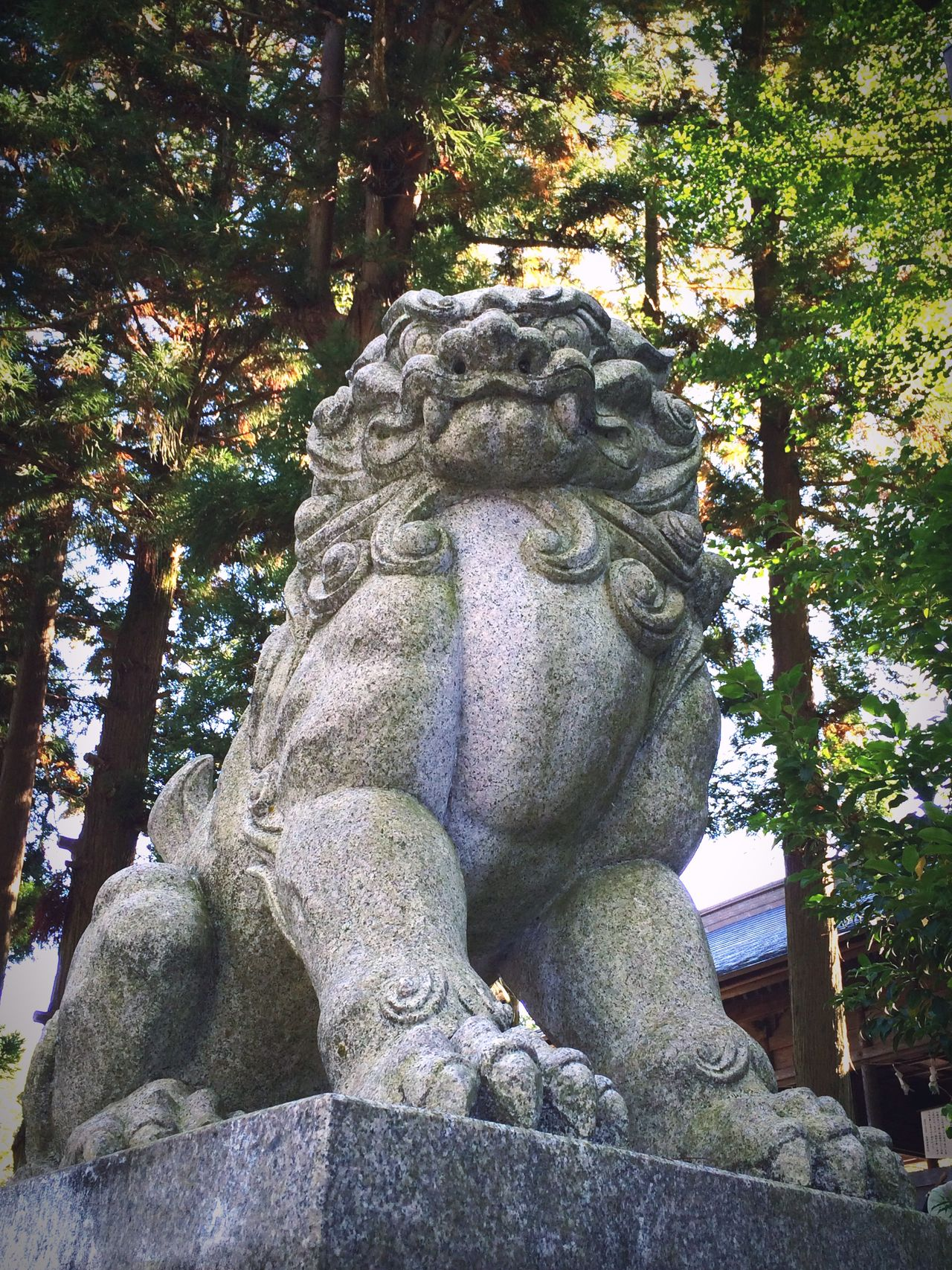 長野県諏訪市諏訪大社前宮 Japan Nagano Shrine Suwa Taisha Komainu Aunnokokyu Japanese Style Mylove EyeEm Gallery Japanese Culture