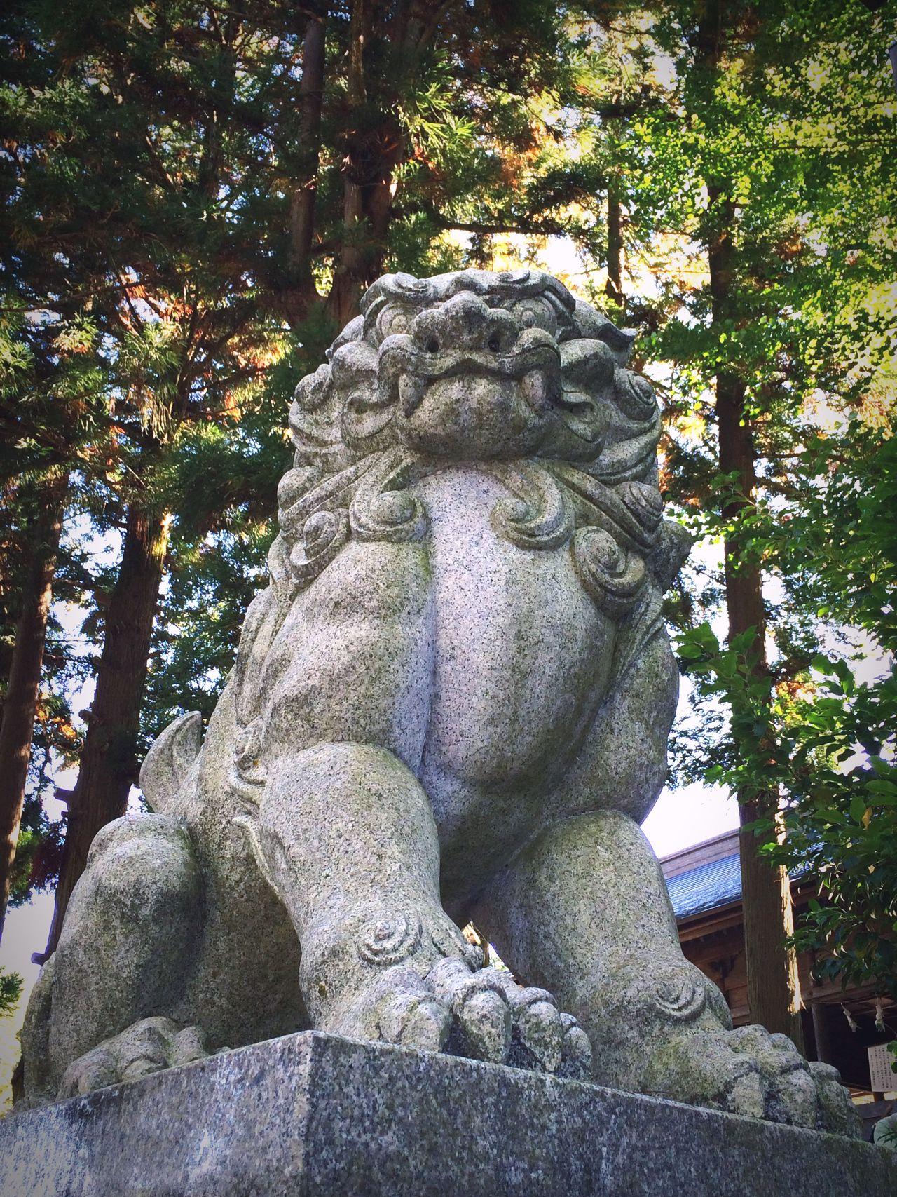 長野県諏訪市諏訪大社前宮 Japan Nagano Shrine Suwa Taisha Komainu Aunnokokyu Japanese Style Mylove EyeEm Gallery Japanese Culture