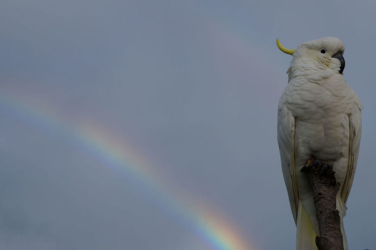 Check This Out EyeEm Nature Lover Rainbow Colors Animal Themes Animal Wildlife Animals In The Wild Beak Beauty In Nature Bird Birds Close-up Cockatoo Day Nature No People One Animal Outdoors Parrot Perching Rainbow Sky