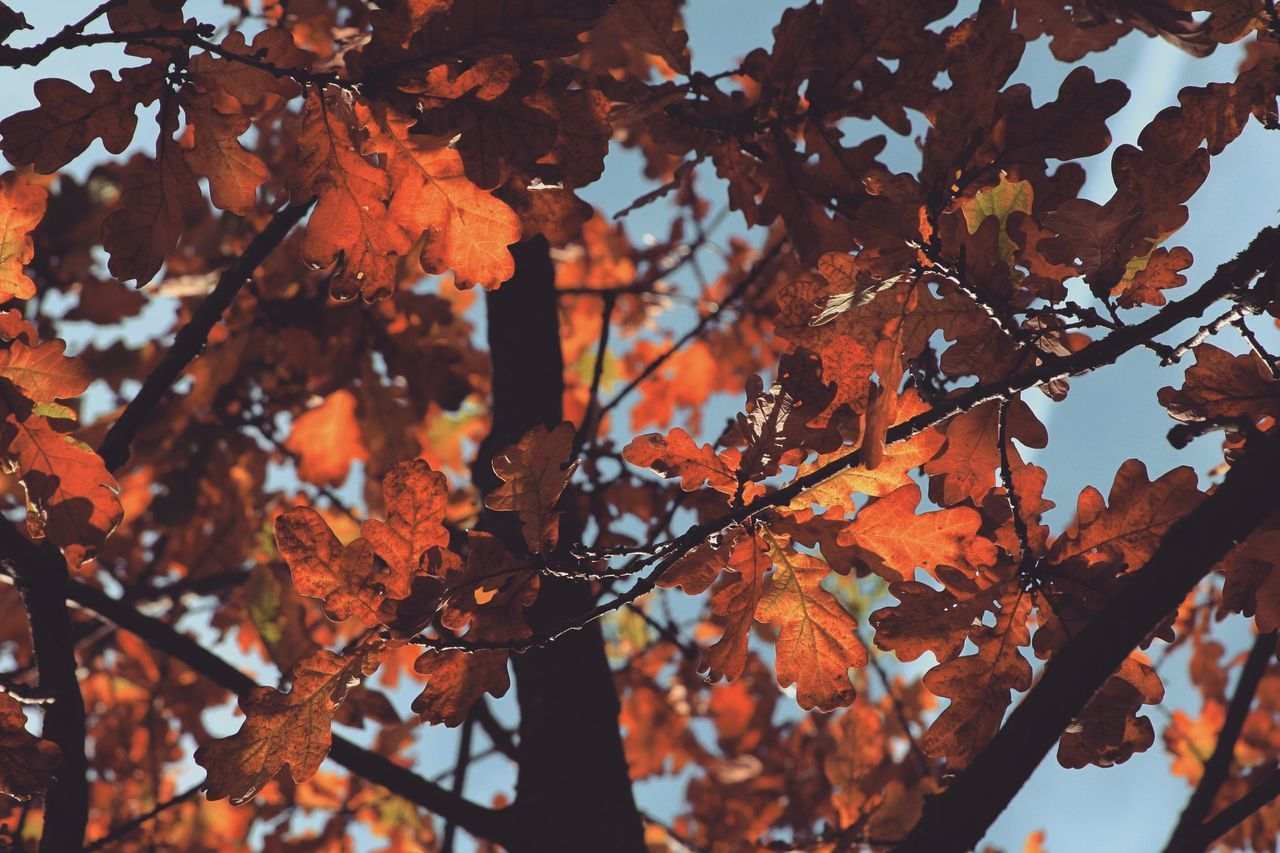Autumn Leaves Autumn Colors Autumn Fall Nature Naturelovers EyeEm Nature Lover Nature_collection Nature Photography Trees Tree Colorful