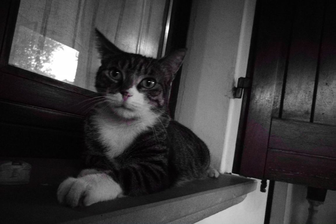 Pets Domestic Cat Domestic Animals One Animal Animal Themes Mammal Indoors  Feline Looking At Camera No People Sitting Portrait Day
