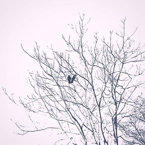 Artphotography Photography Wintertime Winter Silhouette Nature Birds Blackandwhite ArtWork Guevorkaivazian Love Couple Trees Tree