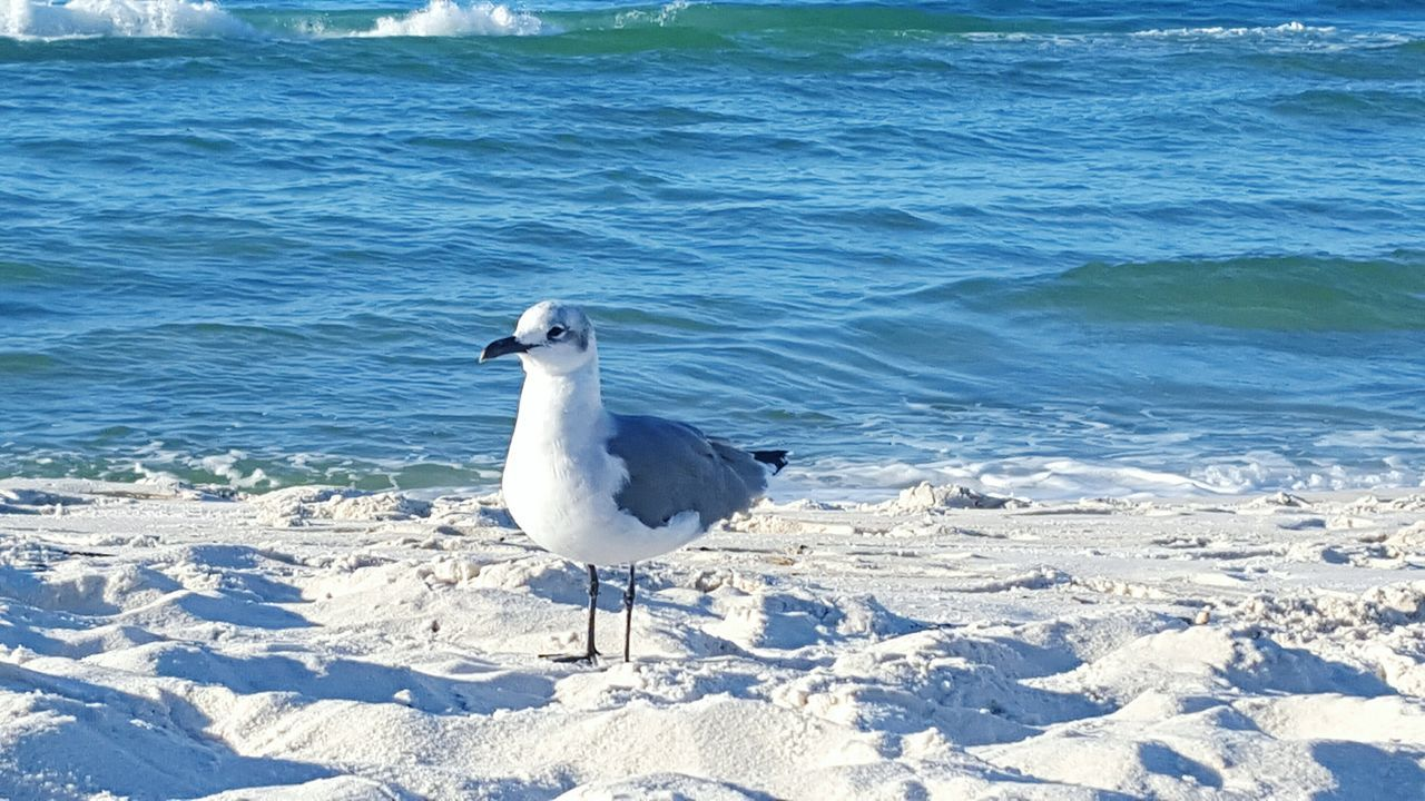 animals in the wild, bird, animal themes, one animal, nature, animal wildlife, seagull, day, sea, water, no people, outdoors, beauty in nature, beach, perching