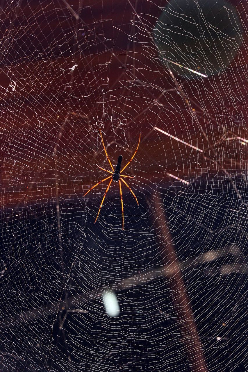 spider web, spider, fragility, close-up, web, one animal, nature, no people, outdoors, animal themes, day