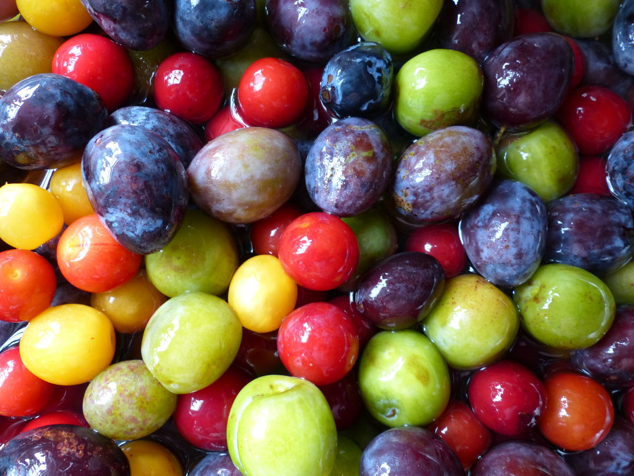 Colorful Colorfull Plums Food Freshness Large Group Of Objects Multi Colored Organic Variation