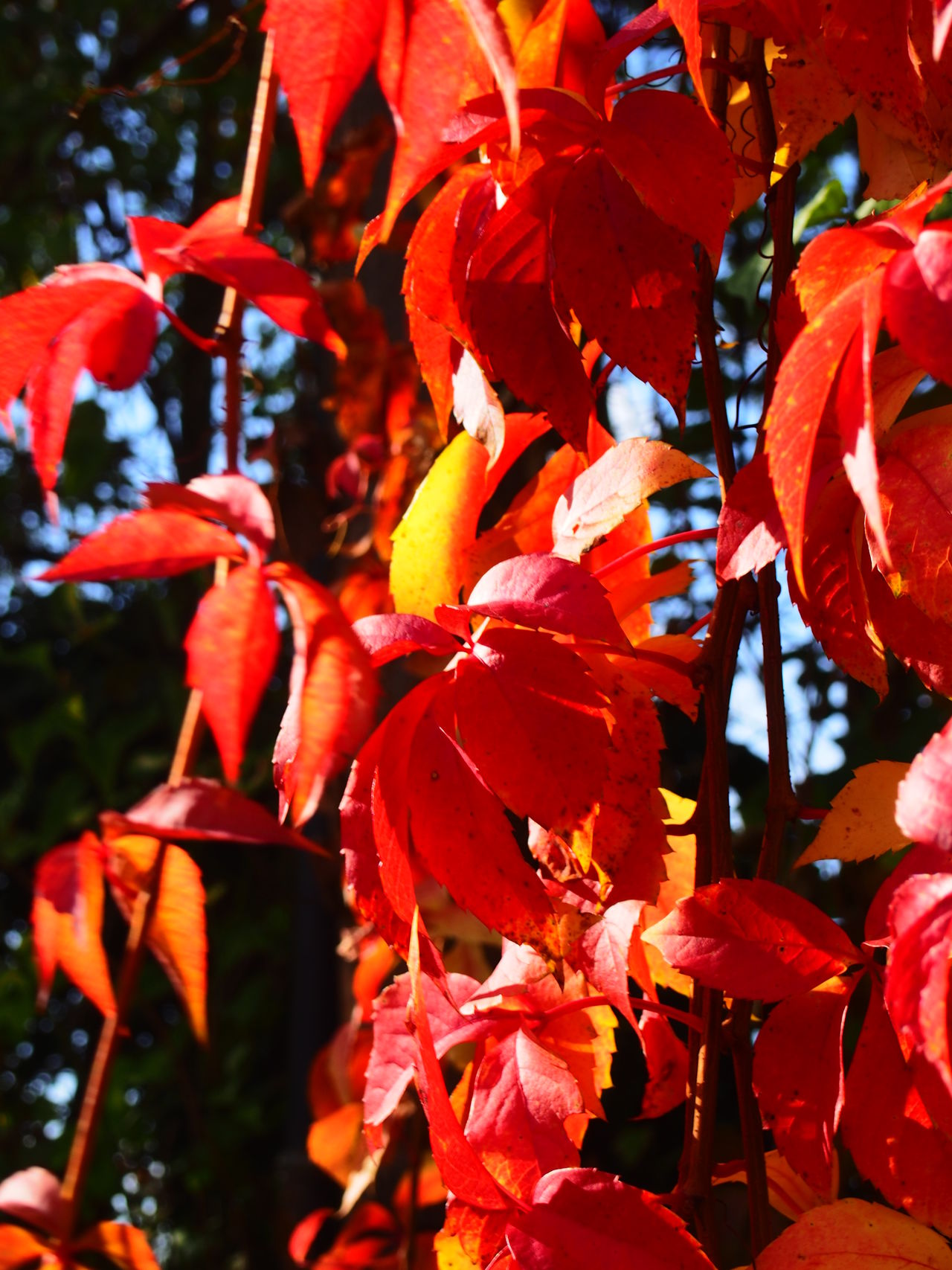 Beauty In Nature Close-up Day Focus On Foreground Fragility Freshness Growth Nature No People Outdoors Red Tree