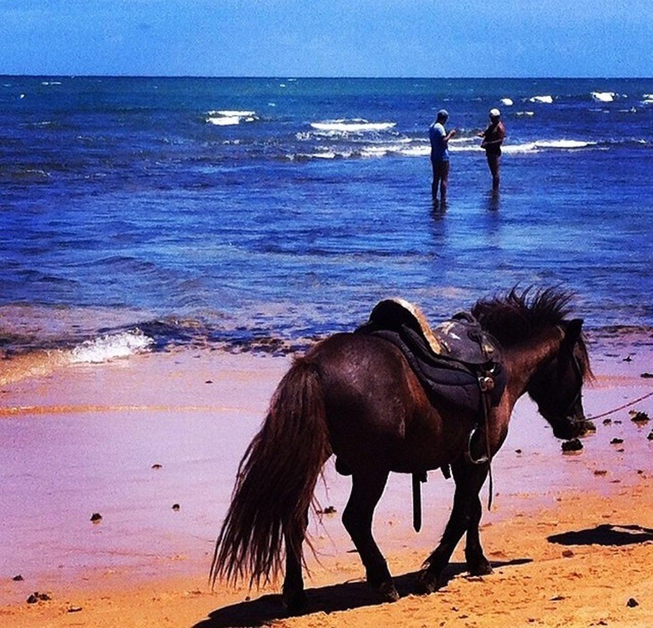 Praia Do Forte, Bahia - Brasil Bahia Brazil Praia Do Forte