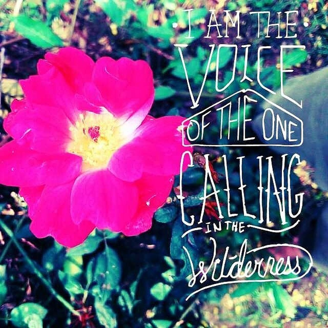 I AM THE VOICE OF THE ONE CALLING WILDERNESS. Desi_diaries After_rain Typographyindia Typography VSCO Vscocam Vscoindia Ahmedabad_instagram Instagram_ahmedabad Lumiaphotography Lumia730