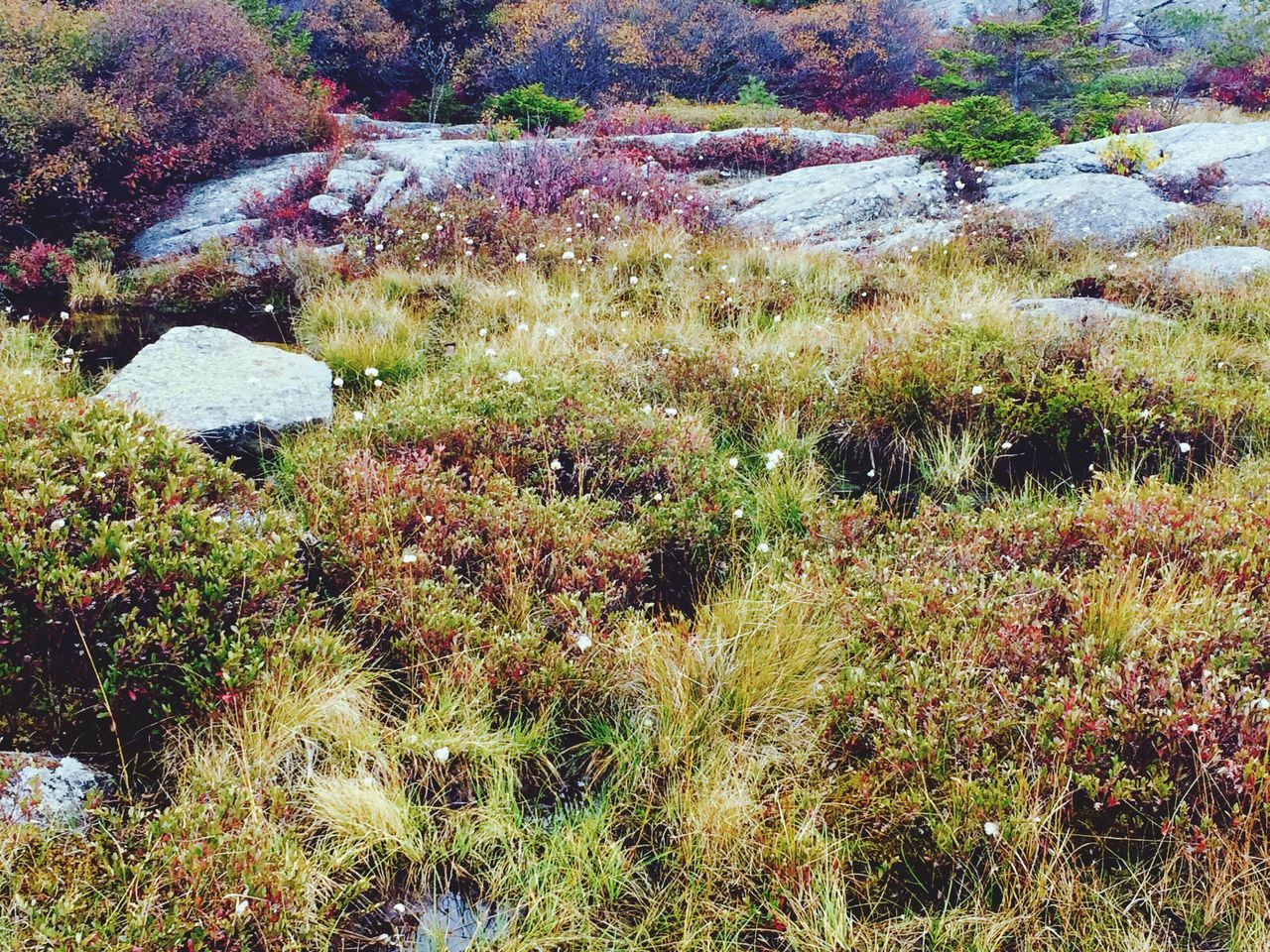 Nature Growth Beauty In Nature Outdoors No People Plant Grass Day Tranquil Scene Tranquility Scenics Flower Close-up Mountain Mount Monadnock Fall Autumn