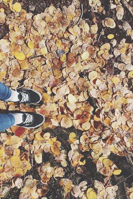 Fall Colors Autumn