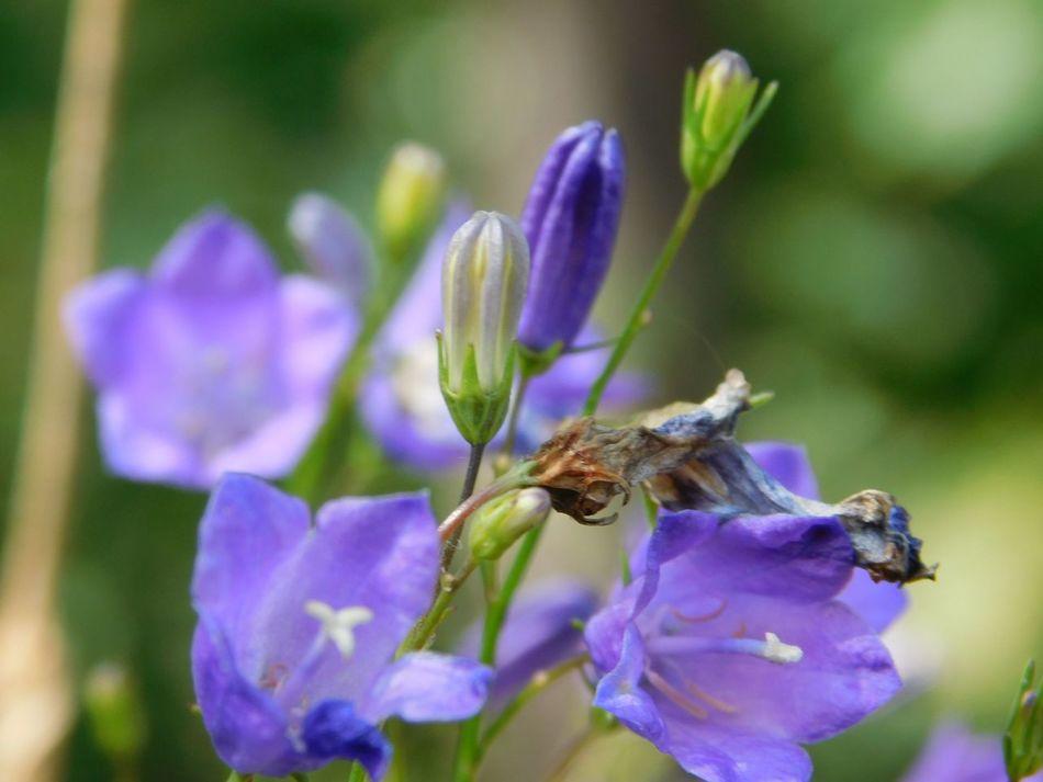 Beauty In Nature Flower Petal Showcase July Walking In The Forest