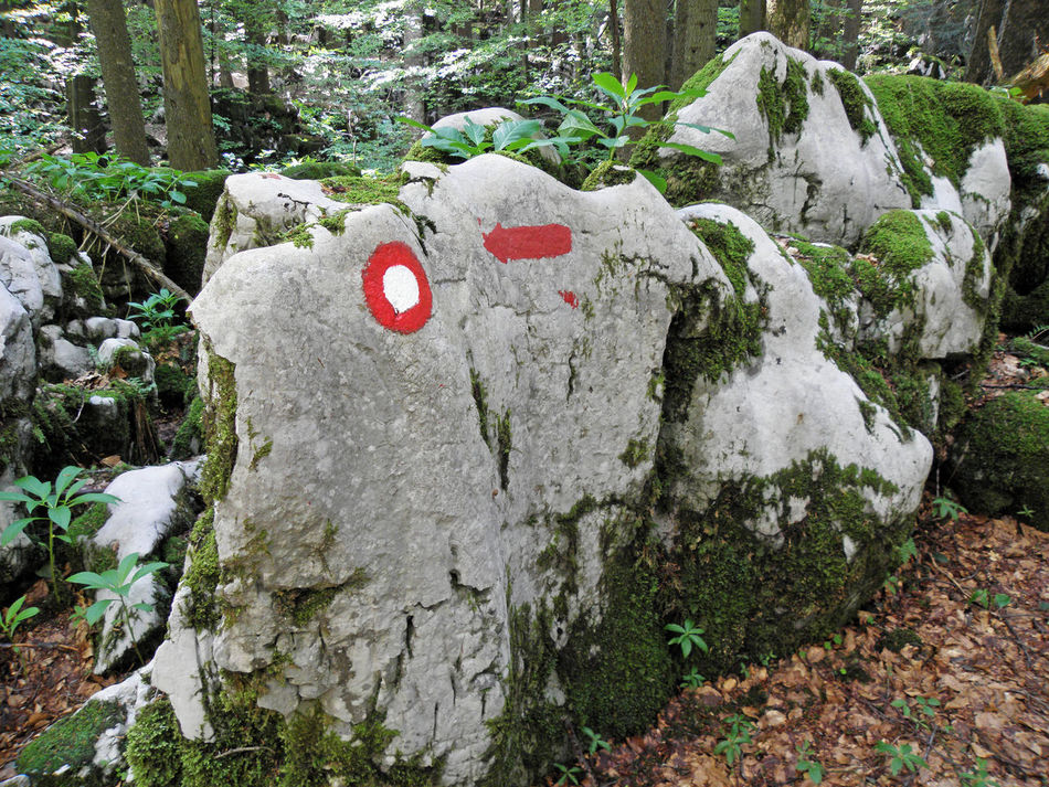 Golubinjak,Gorski kotar,nature details,Croatia,Europe,7 Adventure Climbing Croatia Day Eu Europe Forest Golubinjak Gorski Kotar Marcation Moss Nature Nature No People Outdoors Relaxation Rock - Object Sign Tracking Tree Tree Trunk