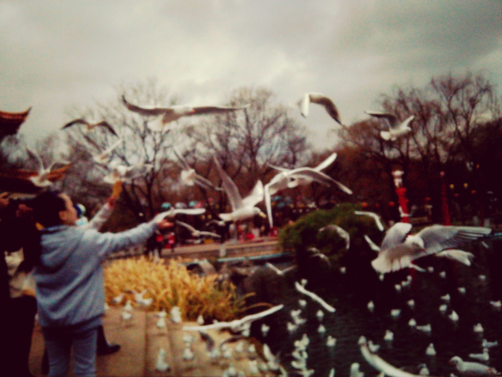 See Gull see gulls from Siberia!?
