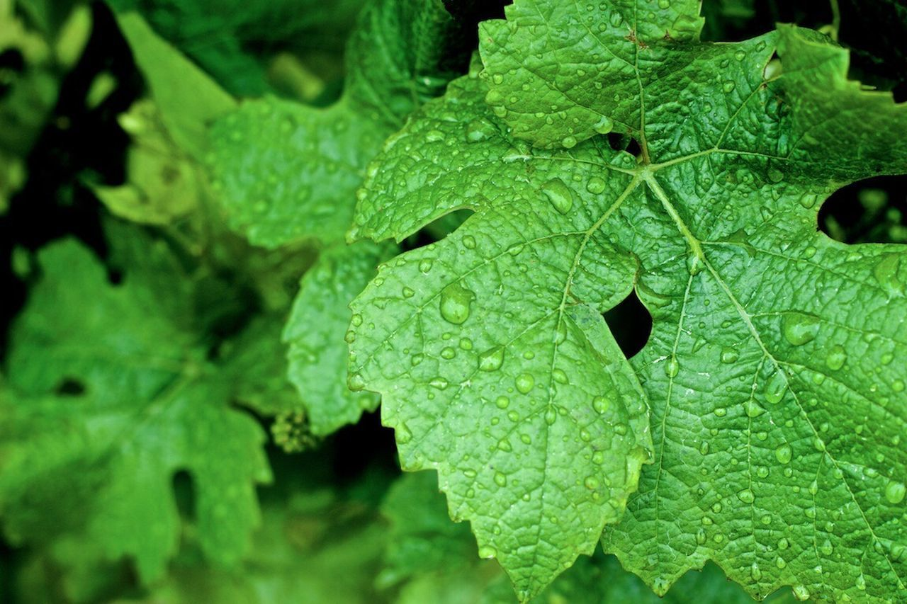 Beautiful stock photos of green, Beauty In Nature, Close-Up, Day, Drop