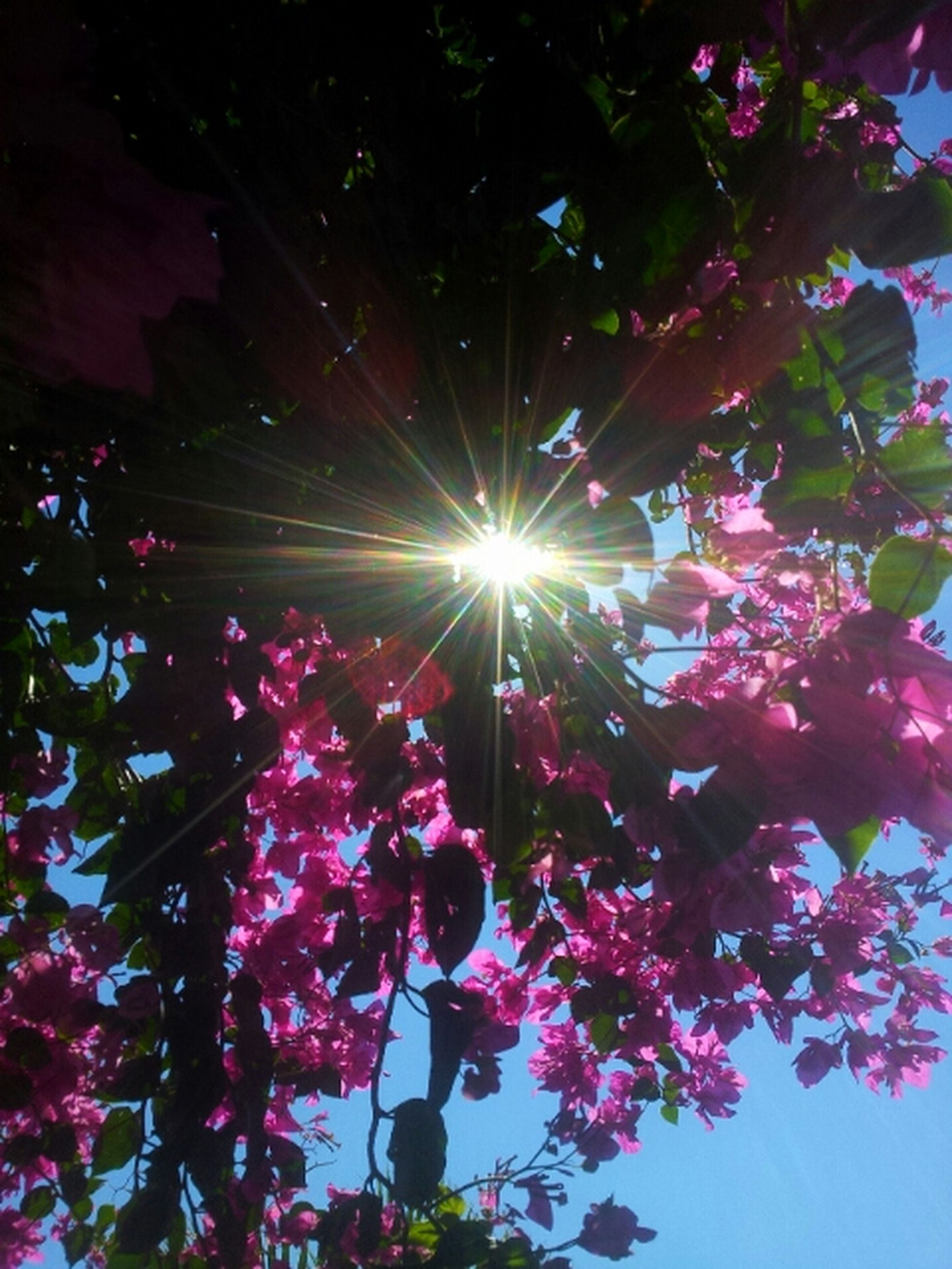 low angle view, flower, growth, pink color, illuminated, tree, freshness, night, lighting equipment, nature, branch, beauty in nature, lens flare, outdoors, red, sunlight, no people, fragility, plant, clear sky