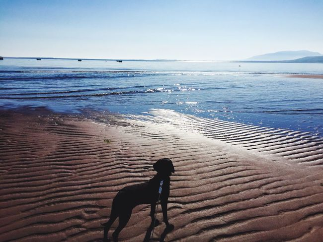 Showcase June Dogs Of EyeEm Dog On The Beach Brandon Ireland