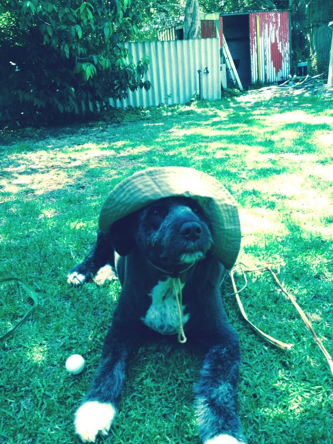 Summer Dogs Hat Christmas Day South Western Australia Pemberton Enjoying Life Hanging Out Relaxing Dog Home