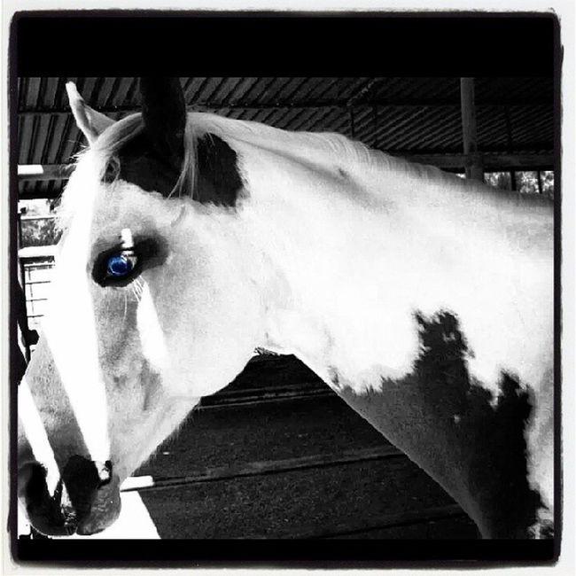 Beautiful Horse Blie Eye