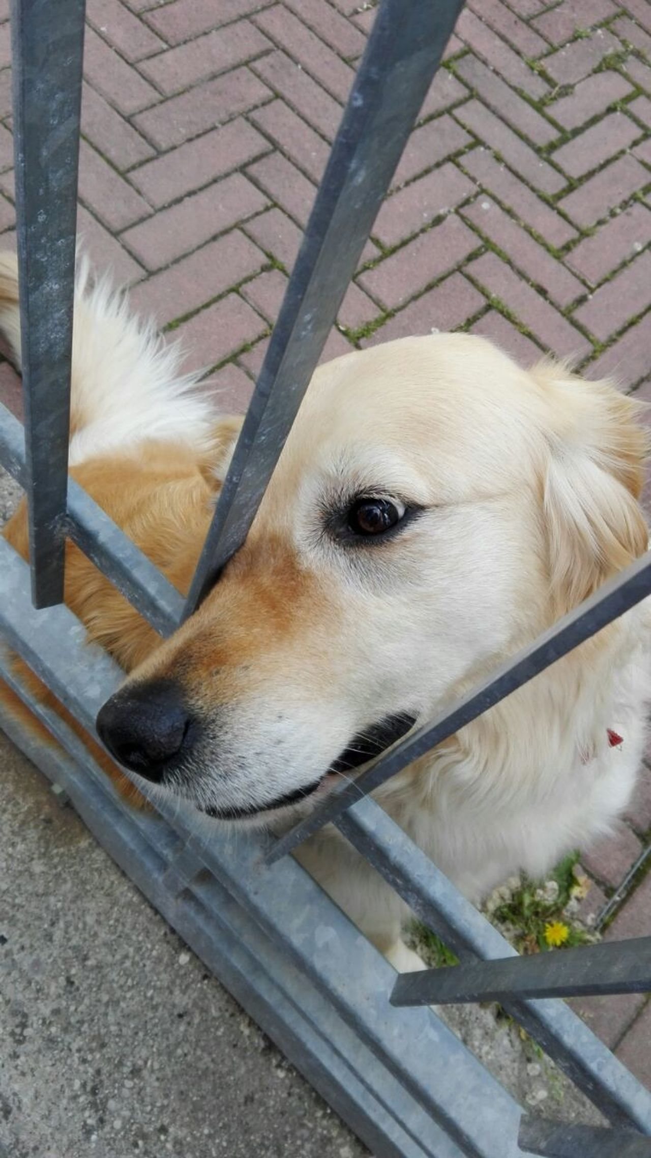Dog Pets One Animal Domestic Animals Animal Themes Outdoors Day Morning Emotions Quite Love Italy Beauty Street Fragility Close-up Cute Pets Cute Love You Little Dog Spring Walking Emotions Captured Sensation Emotions. .. City