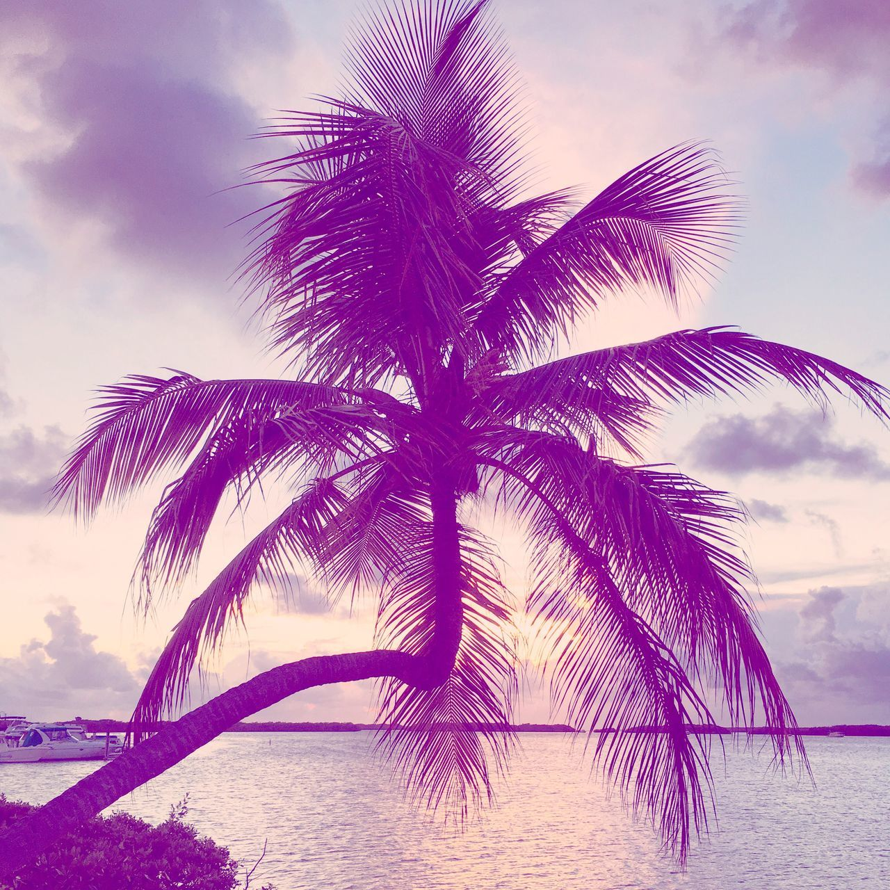 After the sunset Palm Tree No People Outdoors Nature Water Scenics Tranquility Beauty In Nature Quiet Moments Hello World Enjoying Life Taking Photos Check This Out When The Sun Sets Florida Paradise Colors Enjoying The View Peaceful Islamorada Florida Keys Beauty In Nature Tranquil Scene