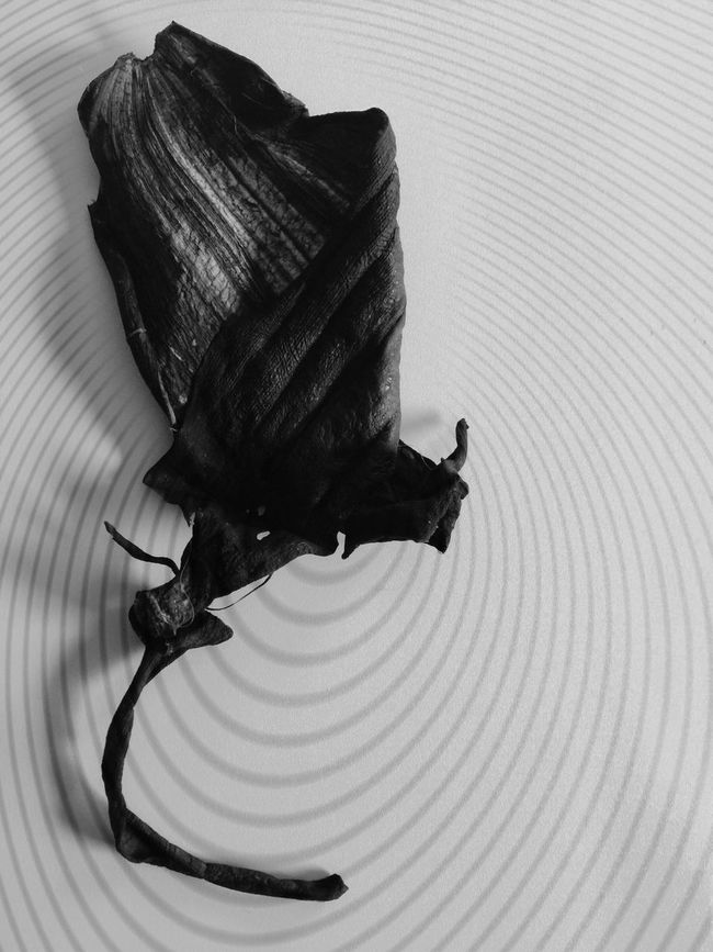 Monochrome Photography Black And White Photography Abstract Photography Abstract Art Abstract Bananas Banana Peel Decay My Unique Style My Own Style Of Beauty My Own Photography