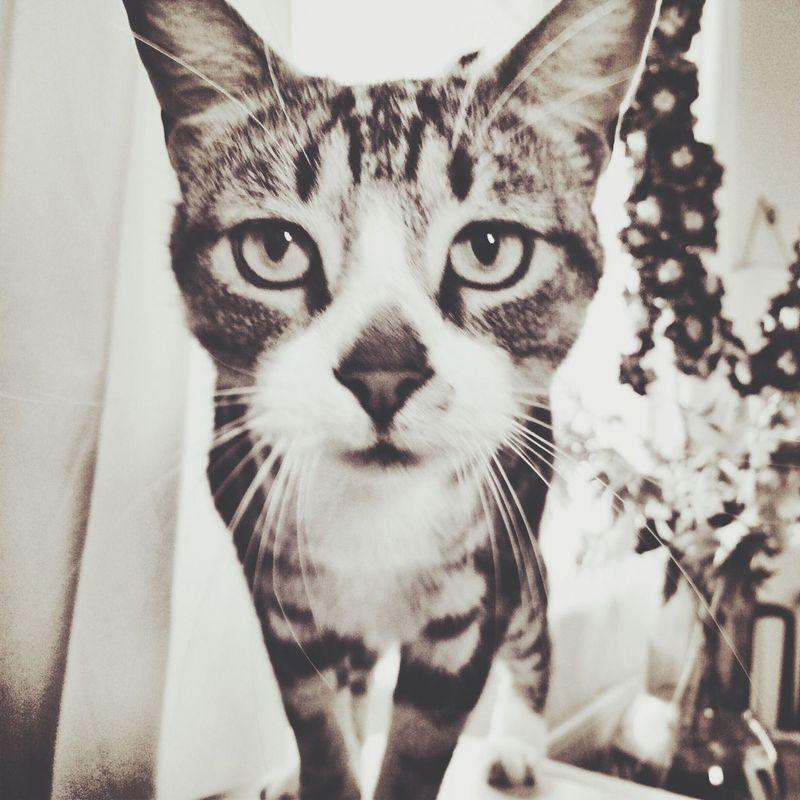 Cat Cat Lovers Black & White London