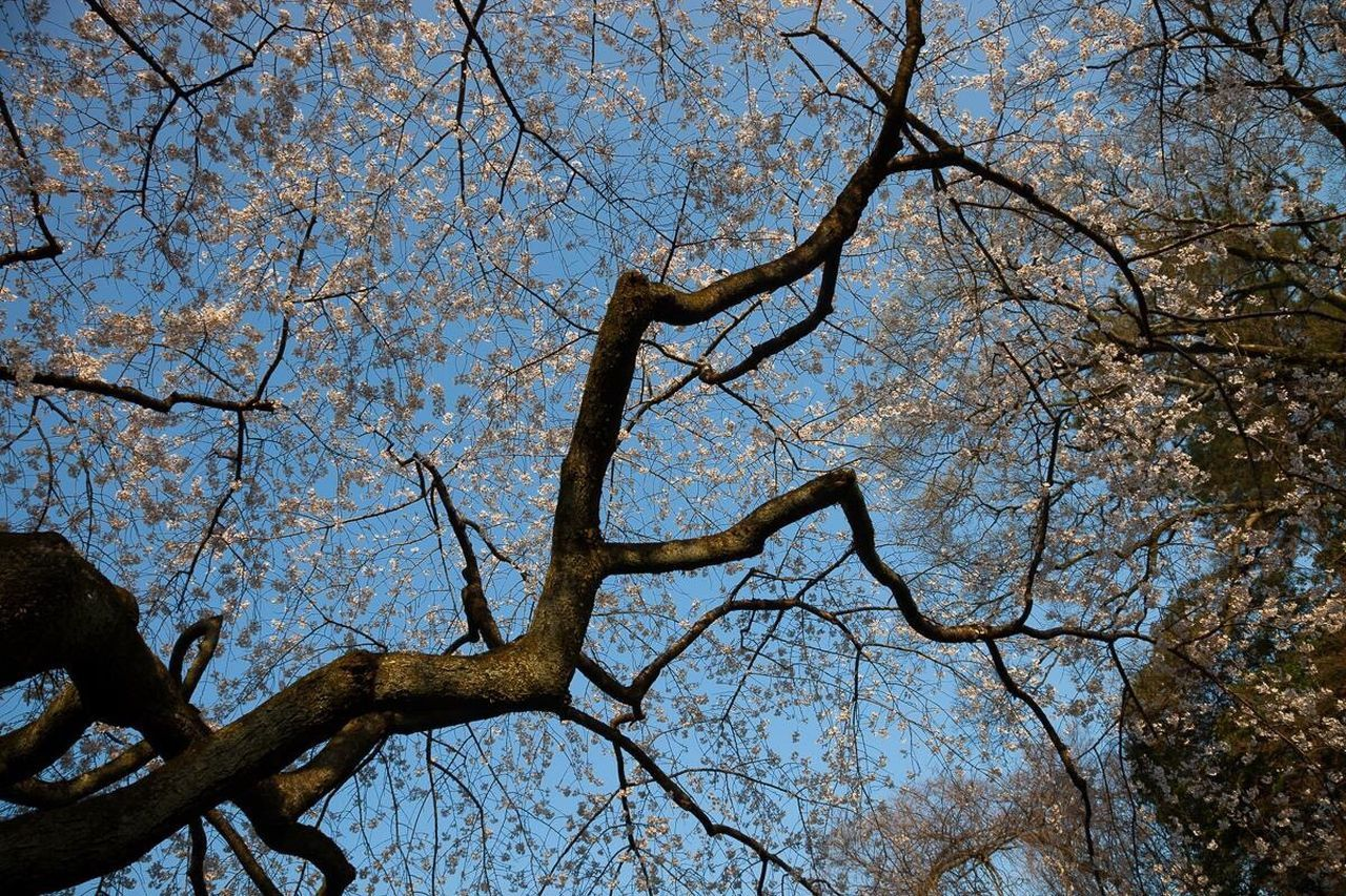 branch, tree, low angle view, nature, beauty in nature, day, no people, outdoors, bare tree, sky, growth, scenics, close-up
