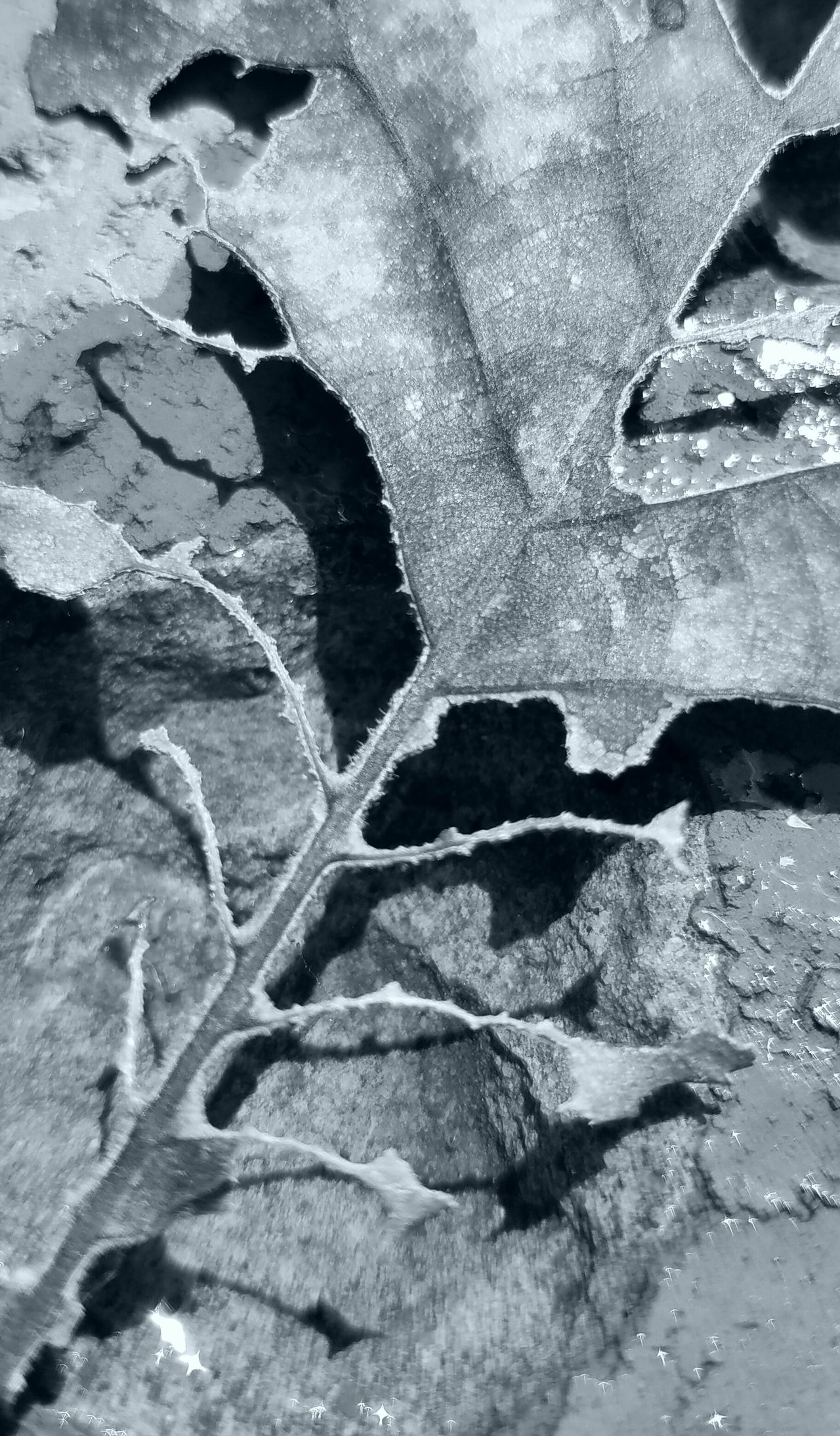Abstract b&w Close-up Backgrounds Full Frame Fragility Plant Nature Outdoors Growth Day Concrete Botany Overhead View MUR B&W The Song Of Light Monochrome Photography Break The Mold Art Is Everywhere Cut And Paste