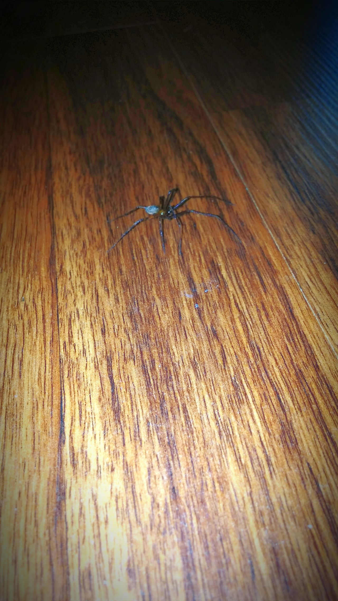 Check This Out Edited Taking Photos Visiting Visitors Spider Spiders 8 Legged Freaks Creepy