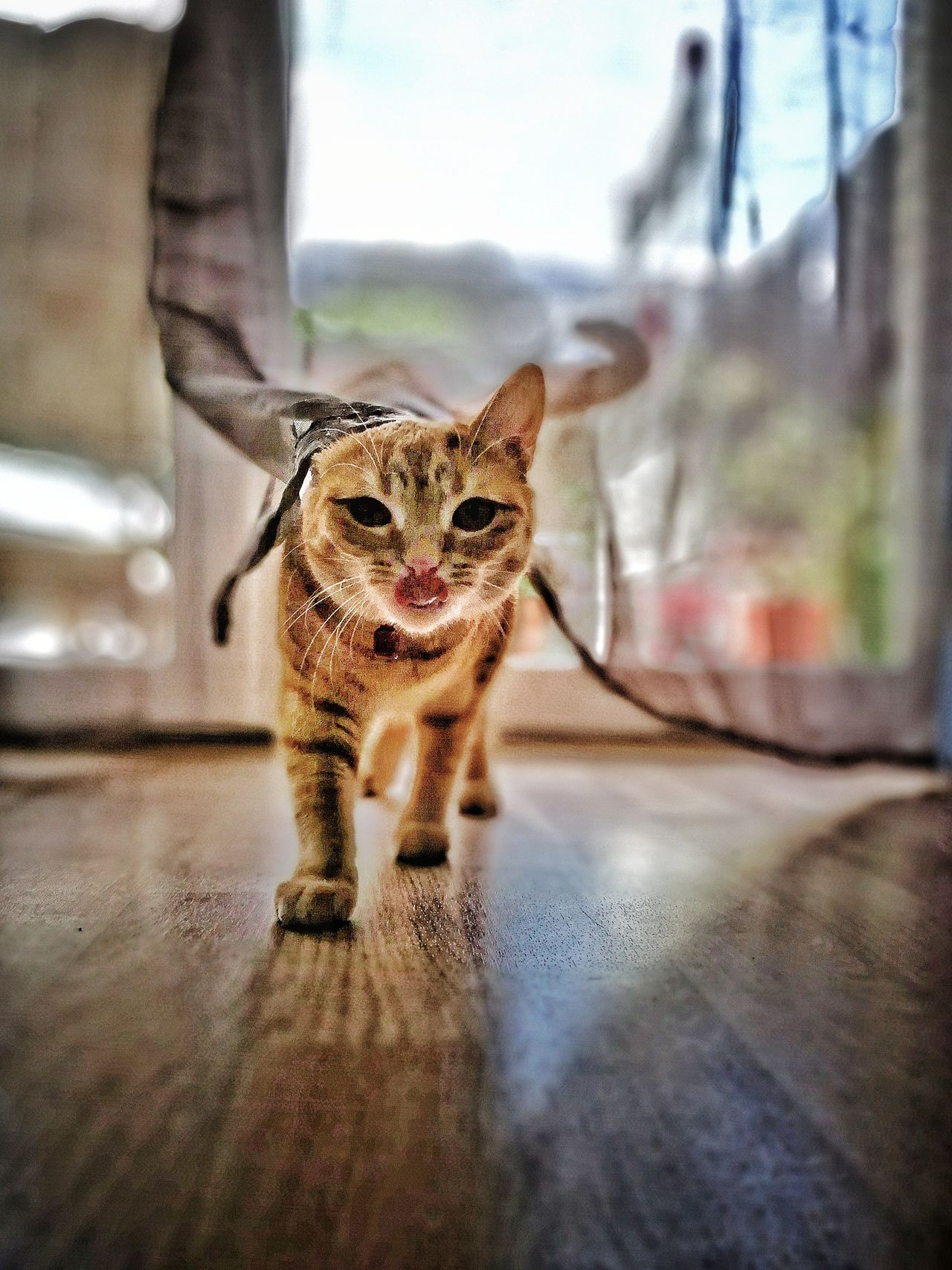 Mistic 🐈 One Animal Animal Themes Domestic Cat Feline Mammal Pets Portrait Day Looking At Camera No People Indoors  Domestic Animals