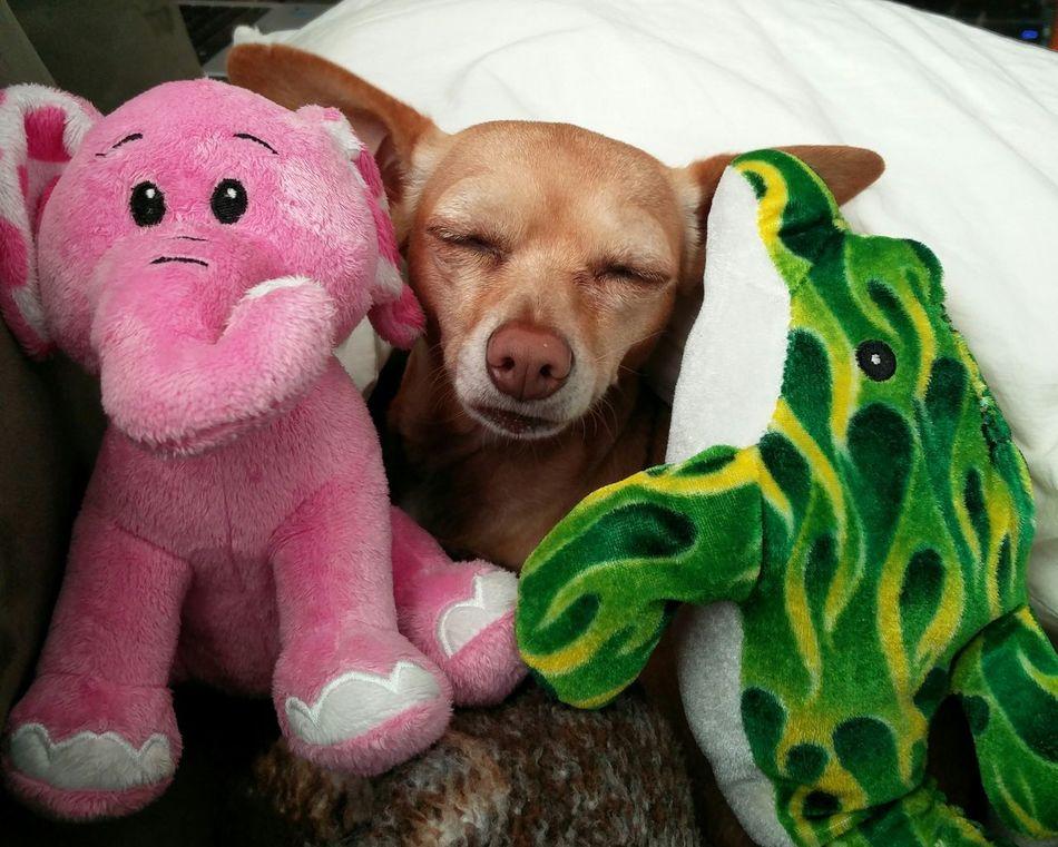 My Sophie. Gooddog Superdog DogLove Dogs Of EyeEm Oneplus2