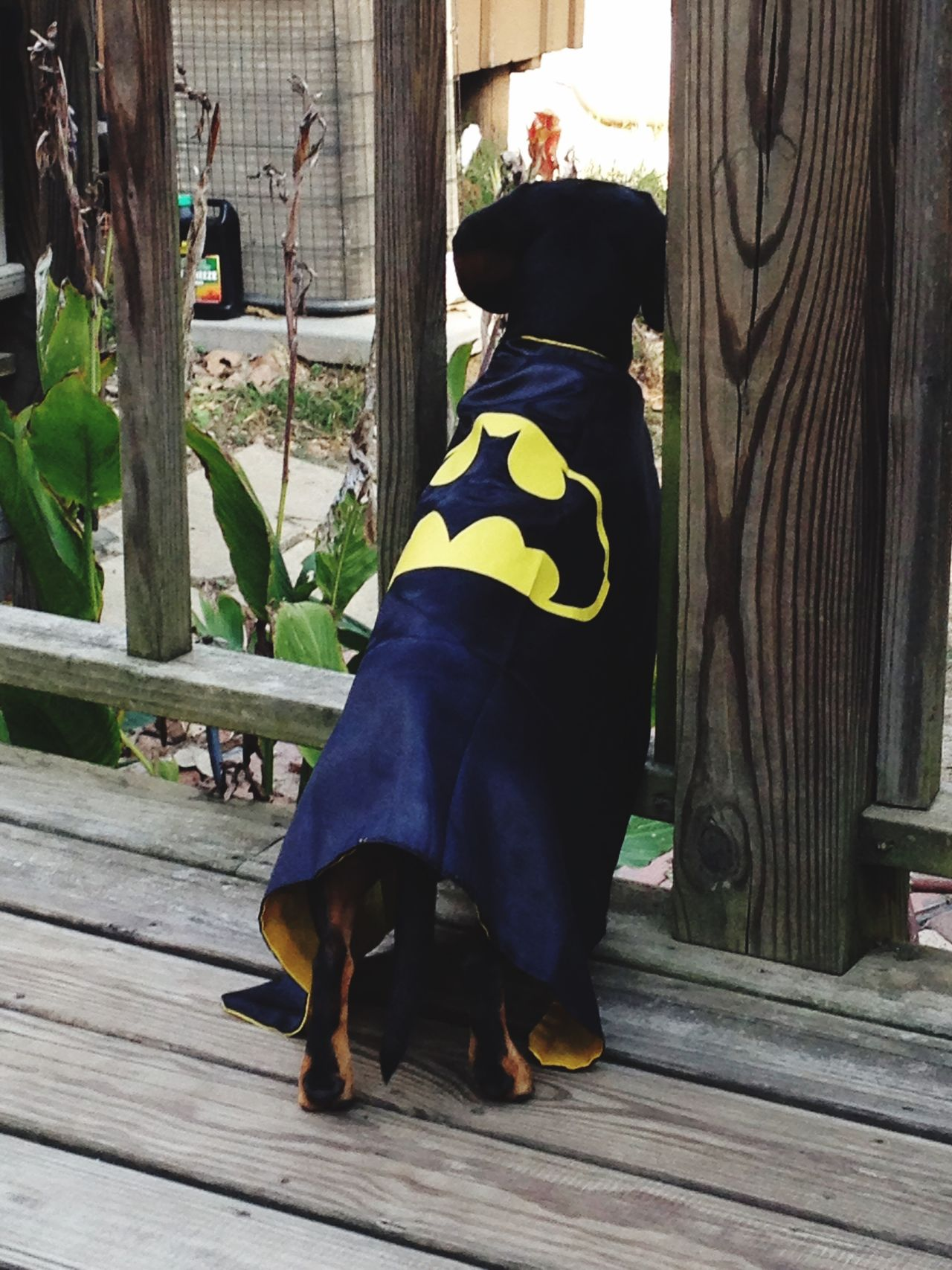 Batman Dogslife Superdog