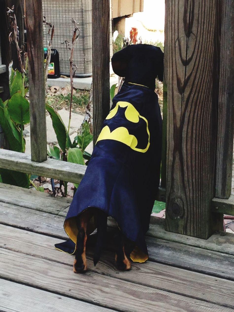 Batman Dogslife Superdog