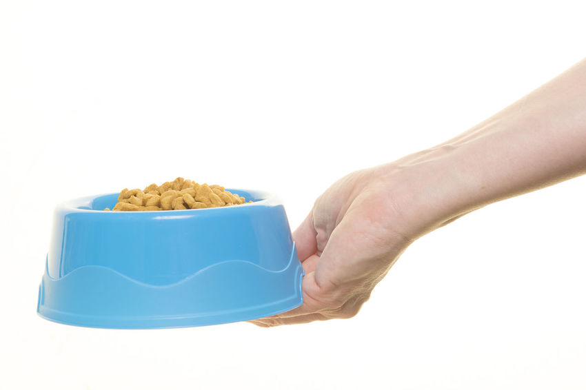 Female hand holding blue plastic feeding bowl filled with cat kibble isolated on a white background Cat Food Feeding  Animal Food Feeding Bowl Food And Drink Hand Human Hand Kibble One Person Studio Shot White Background