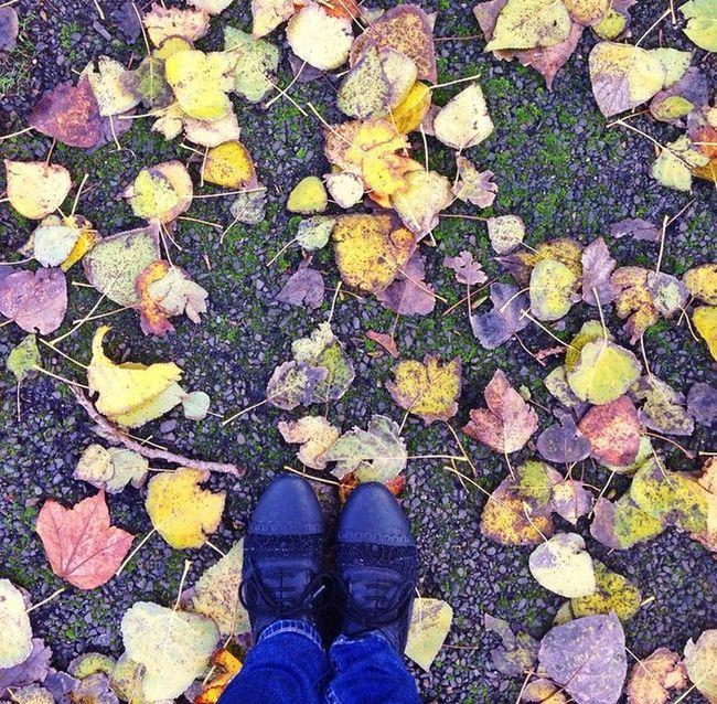 Colourful Autumn Colors Autumn Shoes