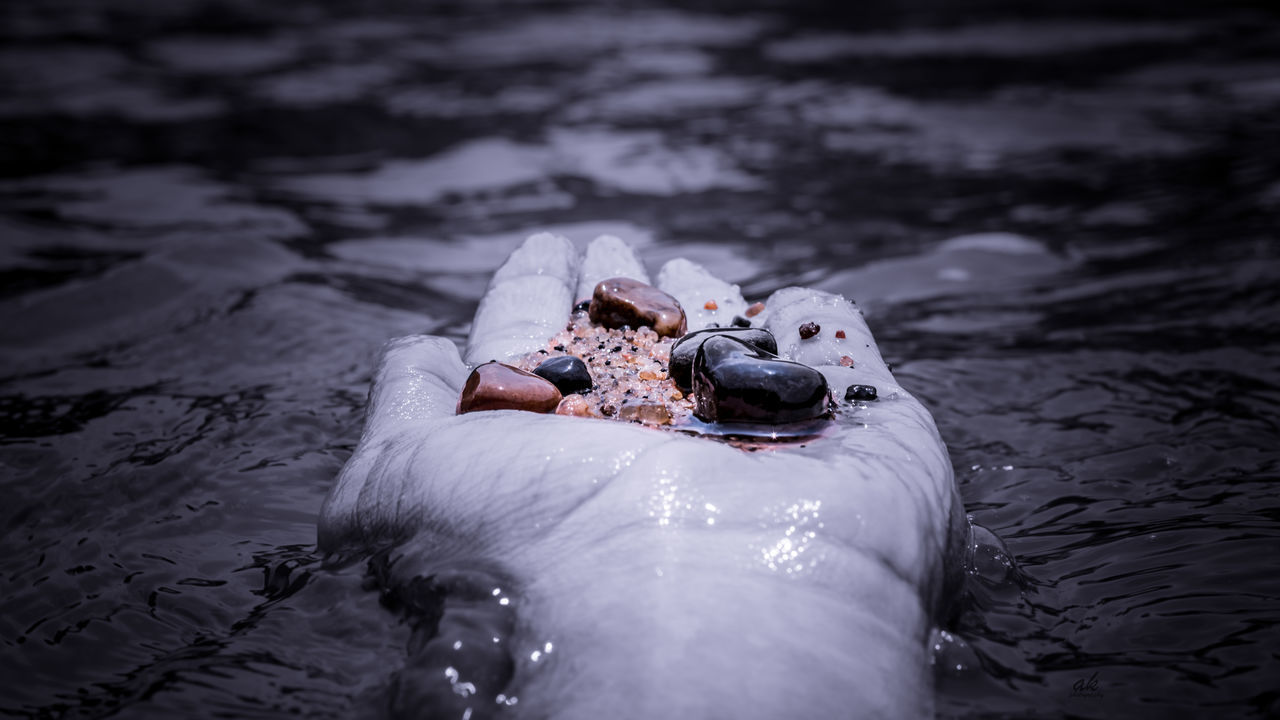 one person, real people, water, outdoors, day, animal themes, nature, human body part, swimming, close-up, mammal, human hand, swan, people