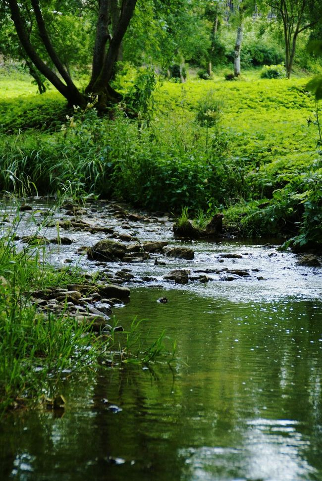 Green Scenery Forest Water Stream Rocks Trees Leaves Green Nature Nature Scenery Nature Photography Calming Pure Water Pure Clensing Onspiring River Latvia