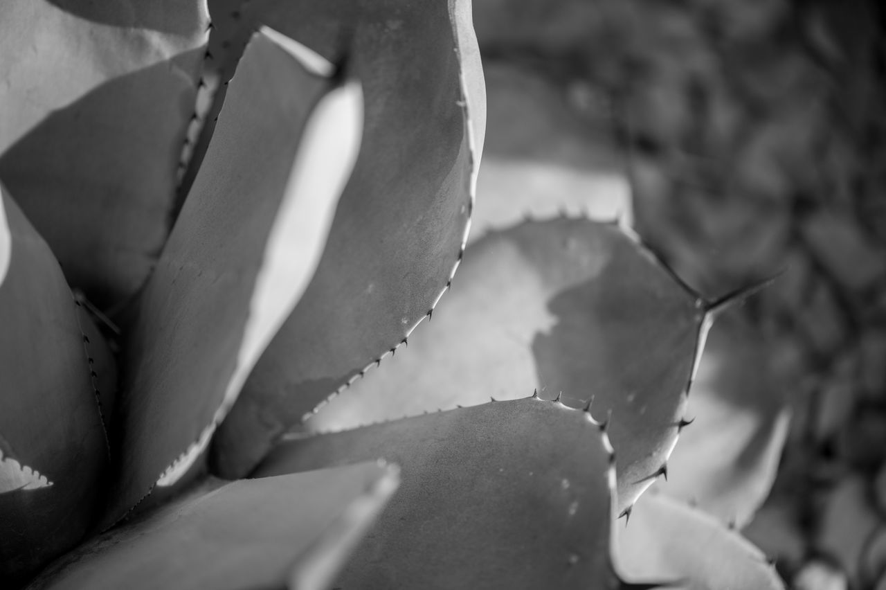 ©Amy Boyle Photography Beauty In Nature Close-up Day Fragility Growth Leaf Nature No People Outdoors