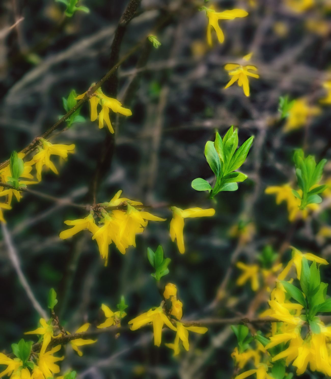 Yellow Growth Nature Plant Beauty In Nature Close-up Flower No People Outdoors Fragility Insect Freshness Flower Head Leaves🌿 Leave Collection Dreaming EyeEm Nature Lover Abstract Flower Abstract Nature Perpective EyEmNewHere Eyem Best Shots The Week Of Eyeem Fineart Getting Inspired